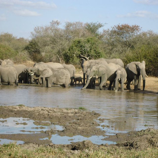 """Elephant Pride"" - Nelspruit, South Africa"