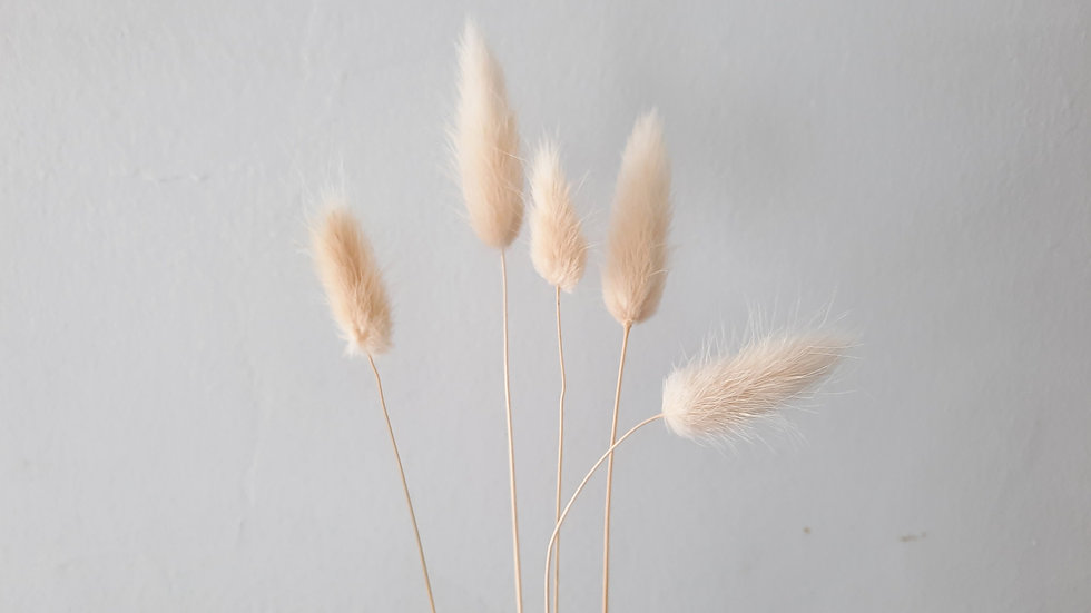 Rabbit Tail White