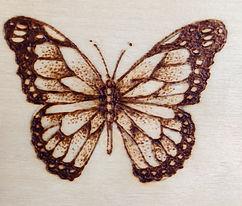 butterflyjpg.jpg