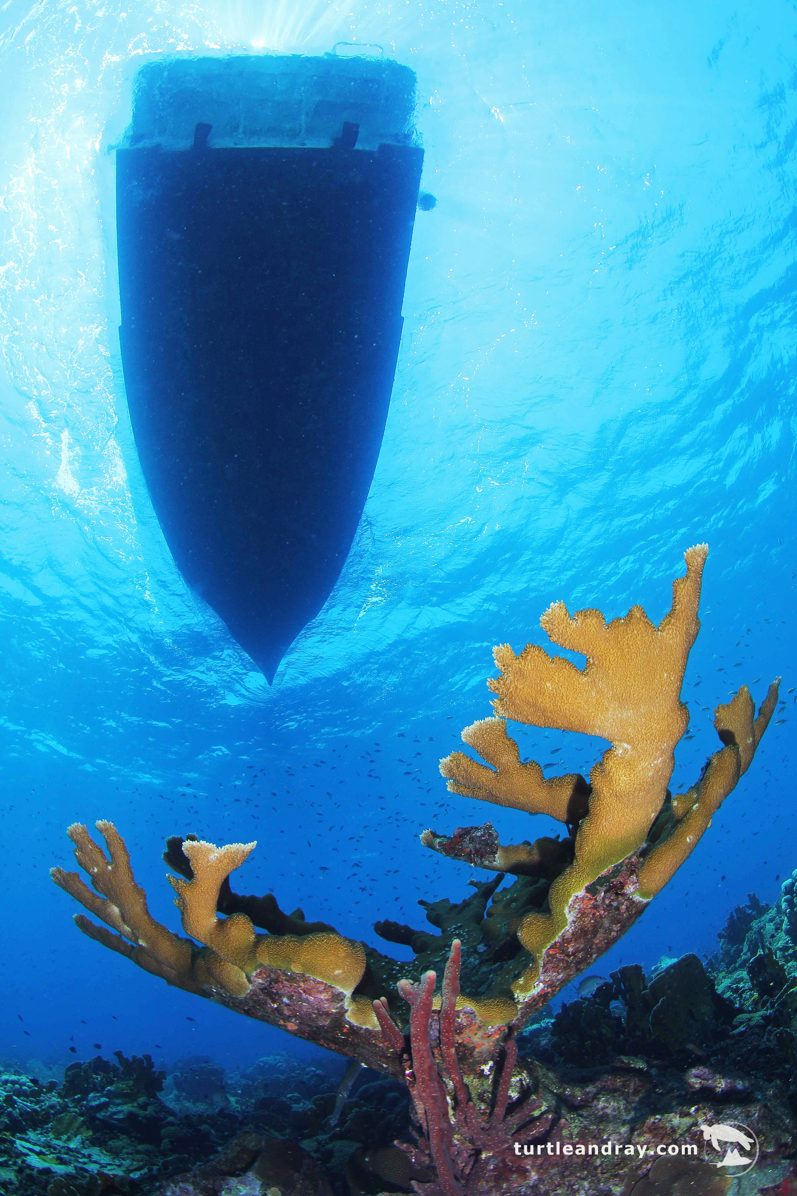 6 Day Dive Package