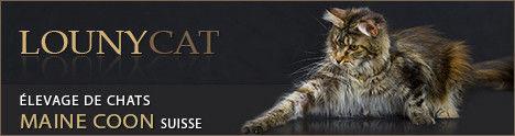 Elevage Lounycat