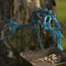 Pine Sap Collection