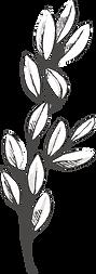 Botanicals-29.png