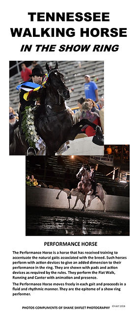 Performance horse.jpg