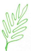 small lead green .jpg