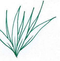 plant cropped.jpg