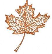 leaf autumn.jpg