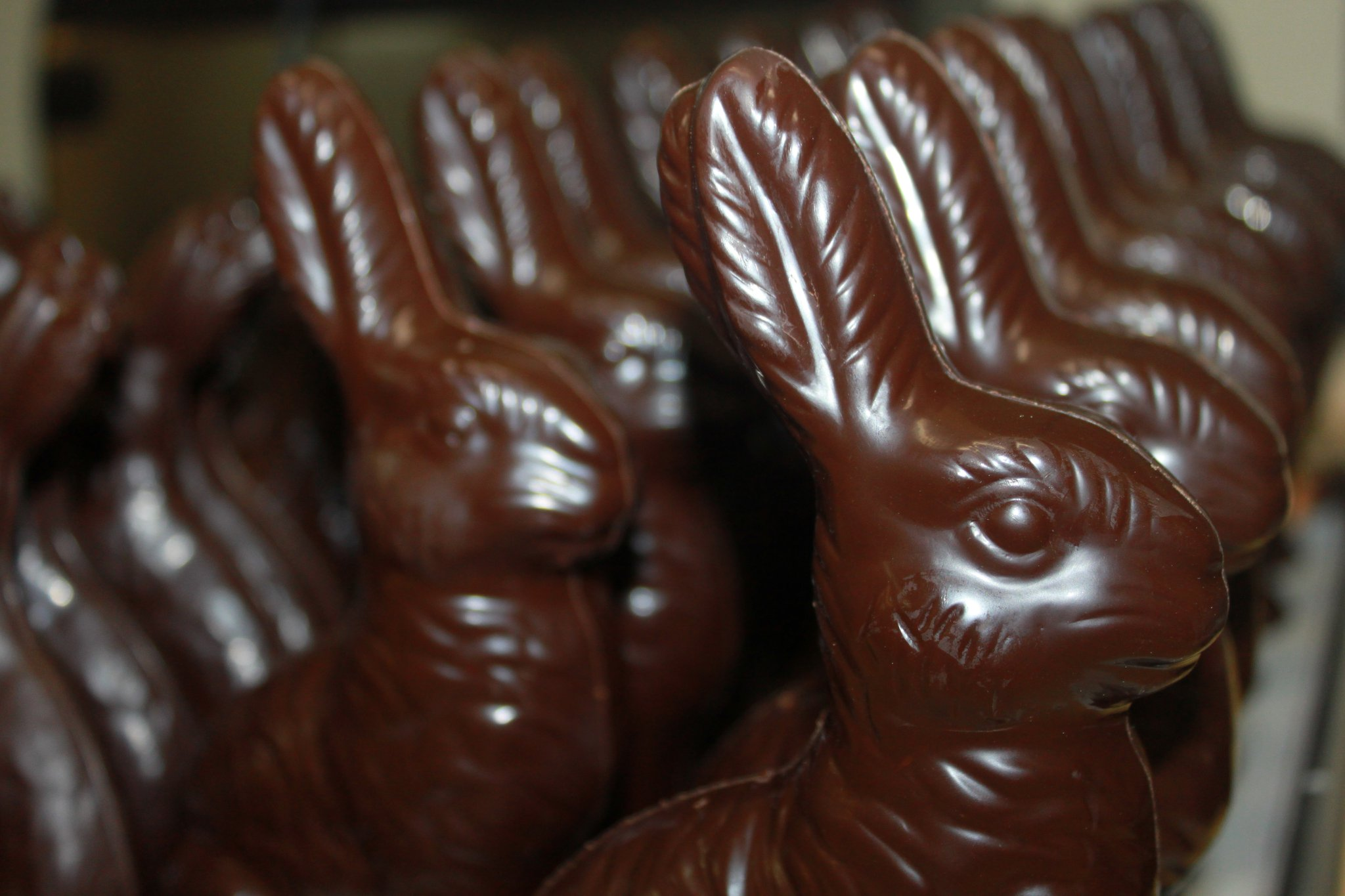 Large Chocolate Bunnies