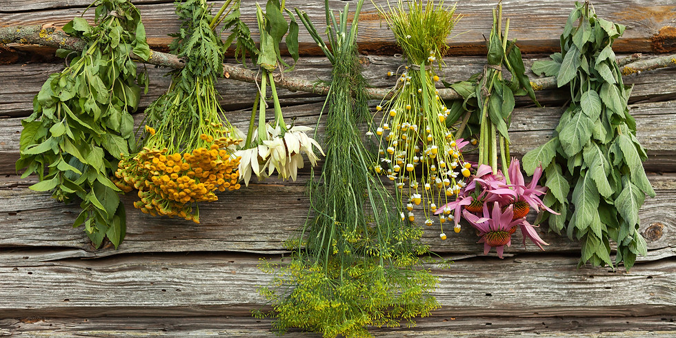 Combining Western Herbs - Treating Exhaustion and Emotional disorder with Jeremy Ross