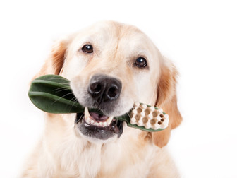 5 Things To Improve Your Pet's Dental Health
