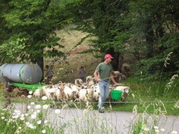 jambjoule moutons.jpg