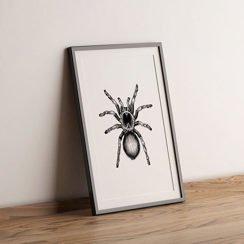 Spider - Bug Collection