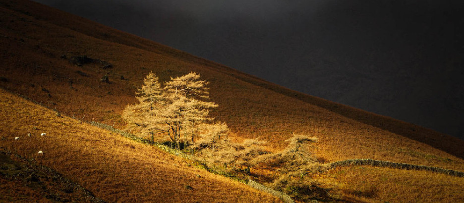 Landscape Competition – Judge Adrian Gidney – Friday 5th February 2021.