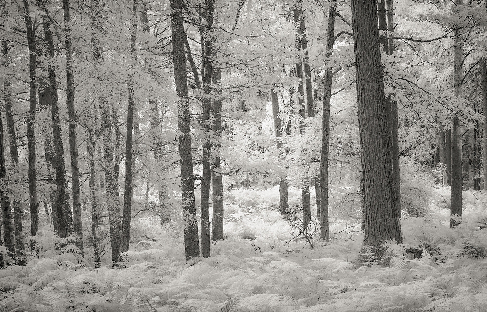 Manesty woods
