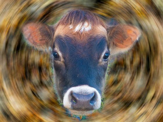 Sonik Cow