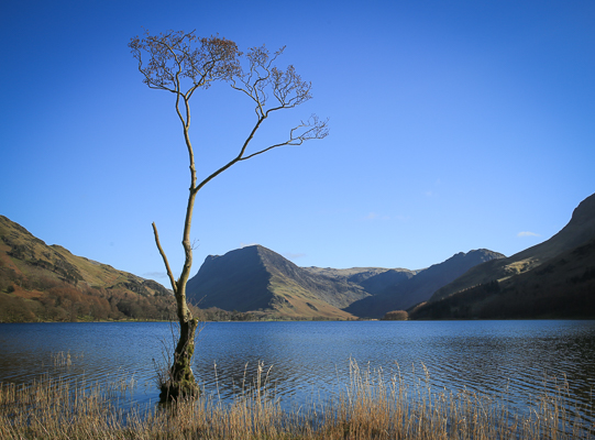 Lone tree Buttermere