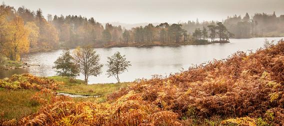 Rainy Autumn day at Tarn Hows
