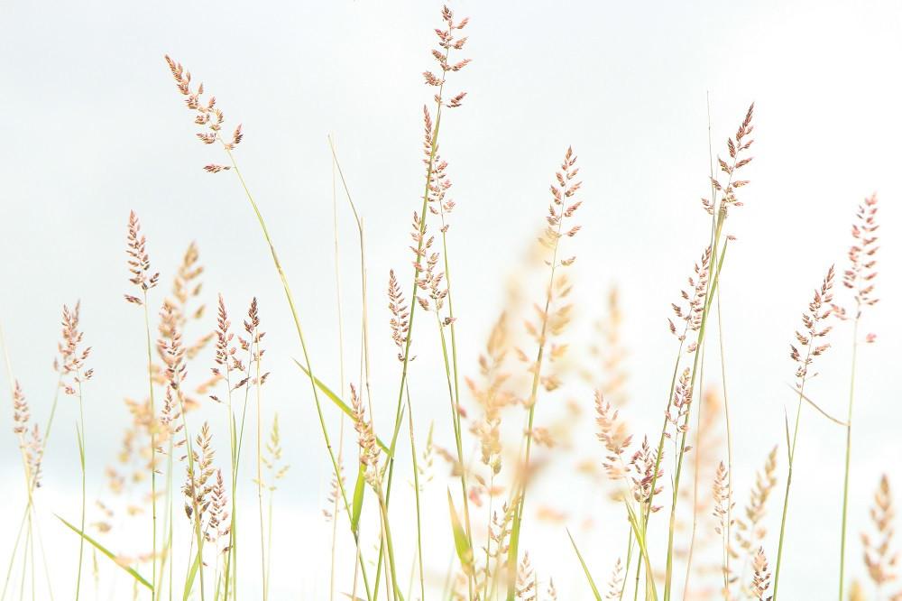 Lakside grasses