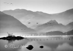 Canadian Geese over Derwentwater