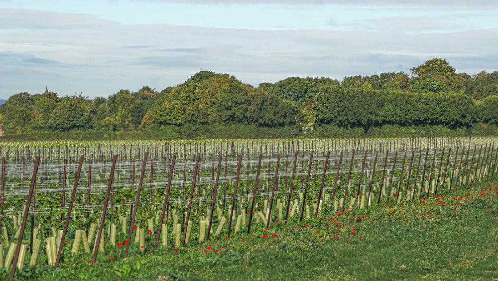 Vineyard - Detling, Kent