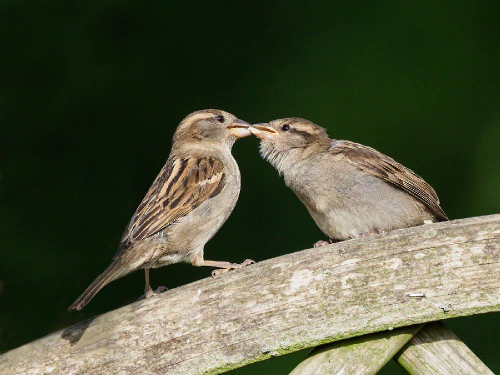 feeding young