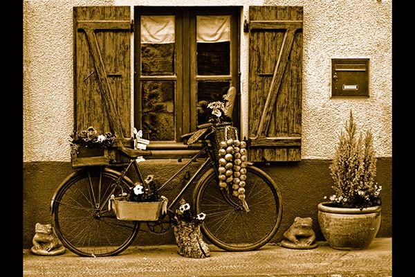 Flowers on a bike