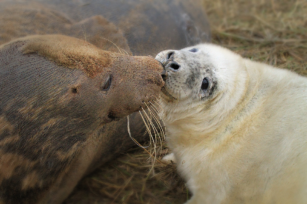 Kissed with a seal