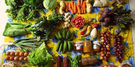 alimentos-agroecologia-750x375.jpg