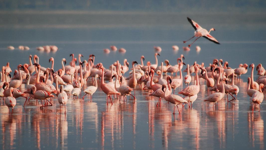 Tierbilder_Flamingos.jpg