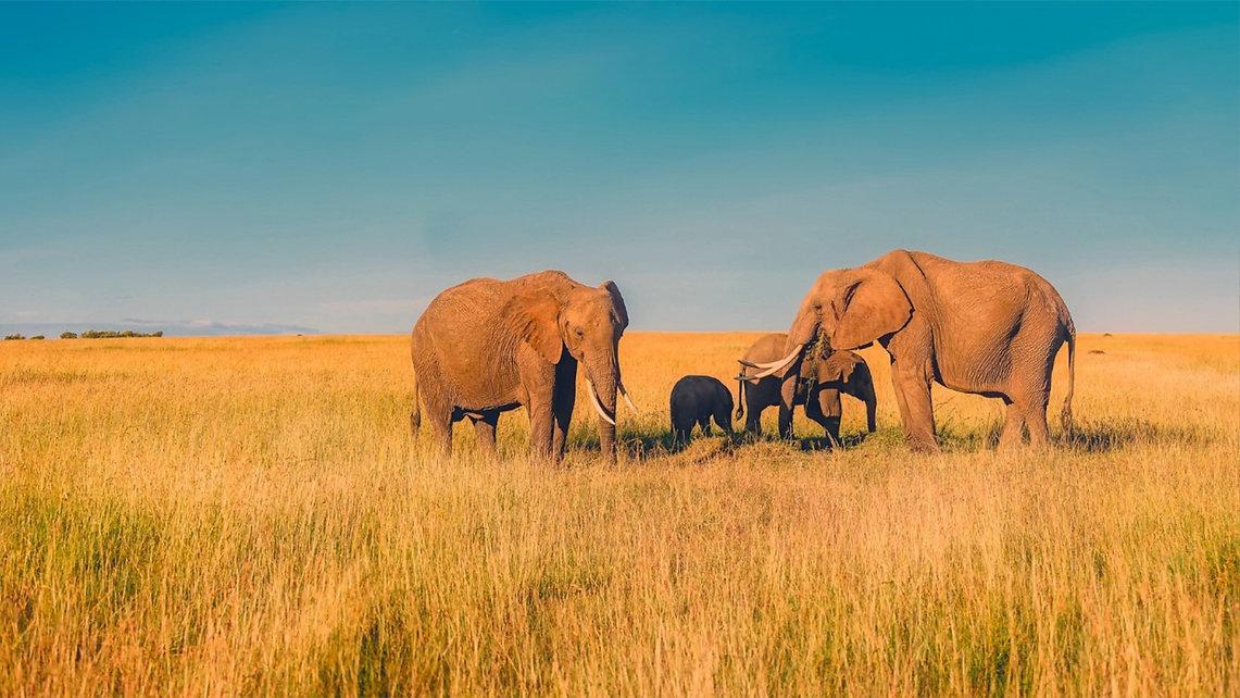 Tierbilder_Elefanten.jpg