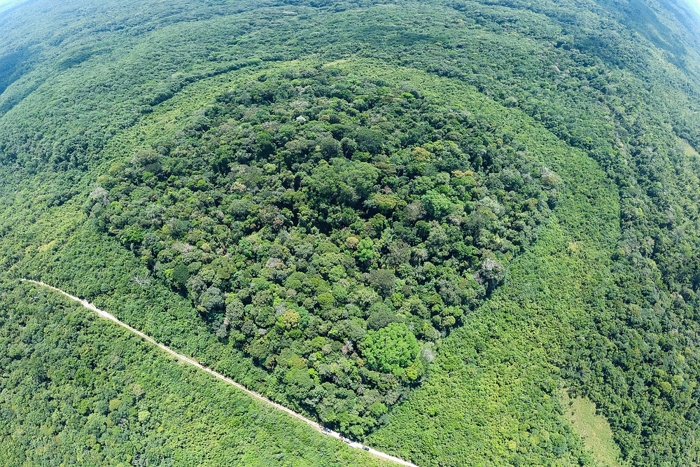 10 hectare forest fragment at ABC research reserve (Photo Credit: Luciano Lima)