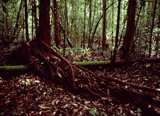 How did Native Amazonians shape the Amazon?
