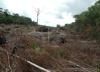 Environmental 'one-two punch' imperils Amazonian forests