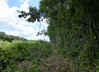 More on Amazon Tipping Point in Mongabay