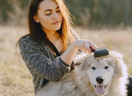 4 Tips for DIY Pet Grooming