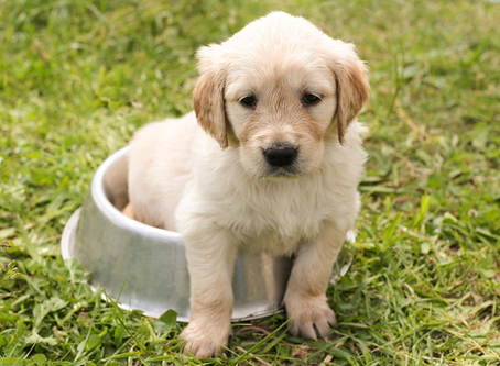 The Advantages of Dog Pee Pad Trays