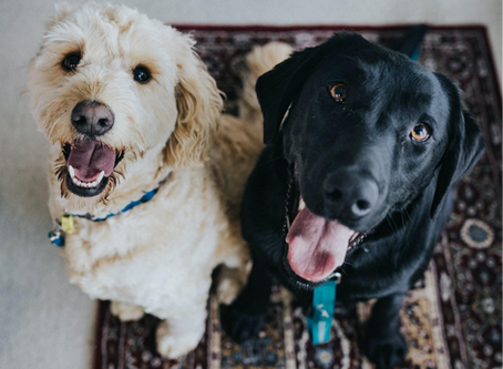 Pet Care Made Easy with Smart Pet Products