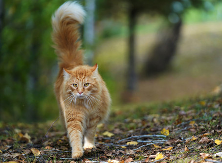 5 Tips To Prevent Your Cat's Great Escape