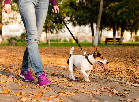 Importance of Cleaning Up Your Dog's Poop and the Benefits of Waste Bags