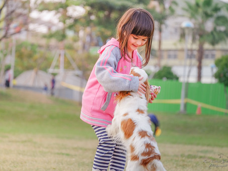 Get Your Pet In Shape With These Playtime Benefits