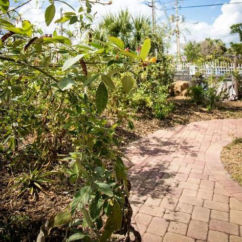 School Garden 2.JPG