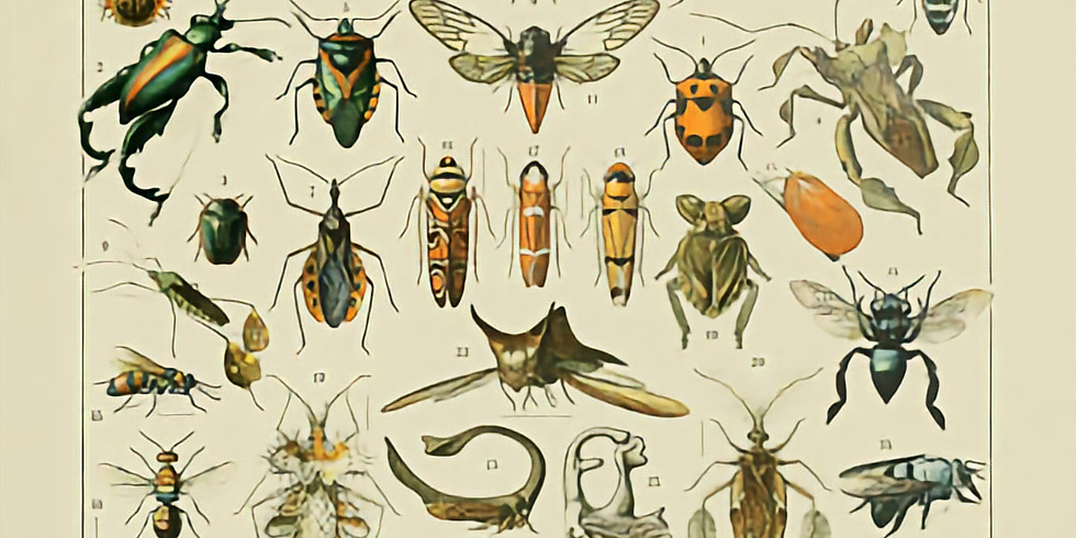 Entomology (Ages 9-14) 10:45am-11:45am   Fridays