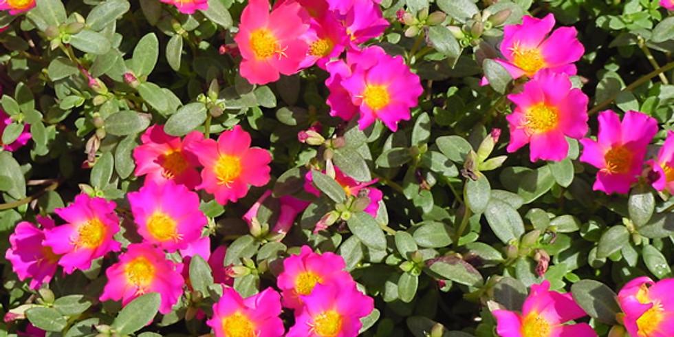 Florida Botany (Ages 5-14) 2:15pm-3:15pm   Fridays