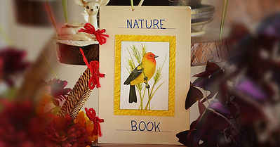 Nature Book, Read Write & Spell, Talita Paolini