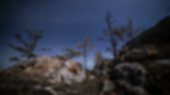 Forest_Night_Time_Lapse00_00_07_17Still0