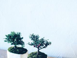 冬に楽しむ盆栽ワークショップ