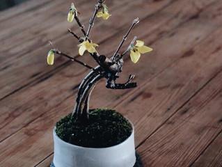 春の花を楽しむ盆栽ワークショップ