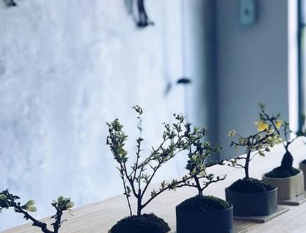 榊麻美植物研究所 盆栽ワークショップ