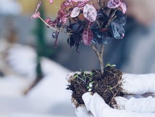 新緑の木々と草花の盆栽ワークショップ【募集中】