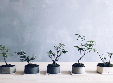 【ワークショップ】榊麻美植物研究所 盆栽作りワークショップ